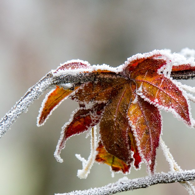 How to Protect your Plants from Frost 1